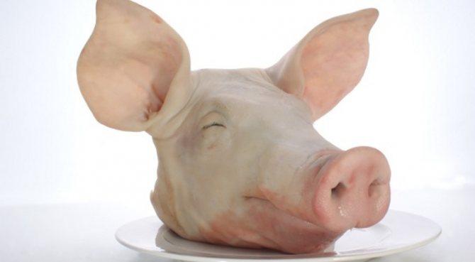 свинина голова